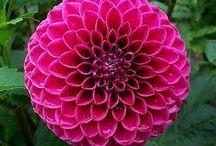Kingdom Plantae: Bulbs