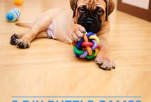 Dog Puzzles and treats