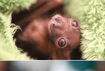 even a bat can be cute / Bat
