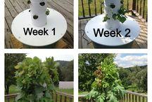 Future of gardening- TowerGarden / Aeroponics