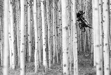 Mountain biking Art