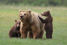 <3 bearz