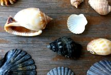 seashells / by Nancy Johnson