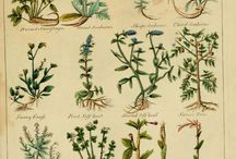 Herbs in history