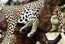 Our Tanzania Safari Adventure