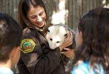 The Orange County Zoo