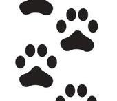 voor website / mijn huisdier