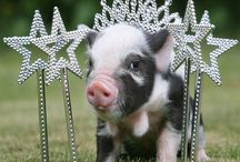 CUTE PIG CRITTERS / FOLLOW THE BOARD AND FREELY PIN WITHOUT LIMITS. / by Kathy Plunk