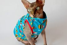 CatZone.cz / oblečky pro sphynx , sphynx clothing