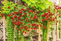 Ideas in Bloom
