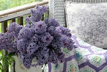 Lilac and Lavender / Beautiful violet hues