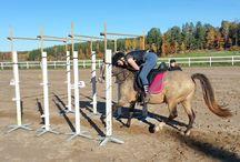Versatility of Rocky Mountain Horses / Versatility of Rocky Mountain Horses