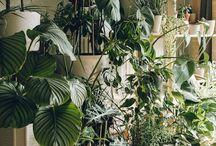INTERIOR: plants