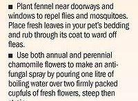 Plantetips