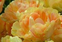 Květiny / květiny
