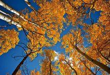 Fotografia no Outono