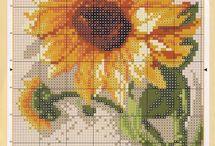 Sun flower słoneczniki