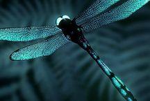Szitakötők dragonfly