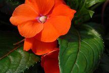 Color My World - Orange