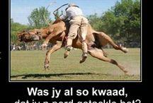 Afrikaans funnies_☆
