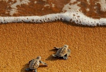 TURTLES!!! LOVE THEM! / by April Chase