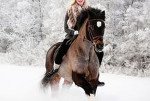 Horse snow photography