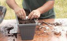 Ajos, Cebollas, tomates, perejil...etc etc / Como plantar ajos y cebollas