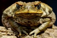 Froggy / by Adeline Nobel