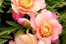 Inspiring Flowers