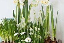 Potted Florals/Plants