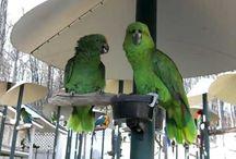 parrot ideas