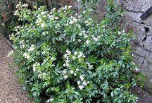 garden: shrubs / by cottonwood