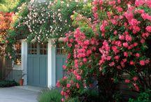 English roses ..garden
