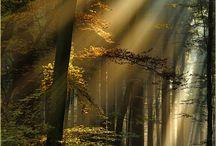 Trees / by Lana Hoard