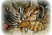 Mis gatos perfectos