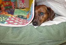Custom Quilted Dog Beds: Pink Doxies / Custom quilted dog beds