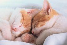 Ajanimo Sağlık&Bakım / Hayvan dostlarınızın sağlığı ve bakımı ile ilgili her şey bu panoda
