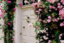 H O M E :  E N T R A N C E / Beautiful, stylish, welcoming entrances