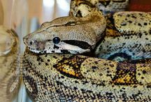 My Snakes / My snakes and photography