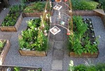 Vegetable Garden Idea's