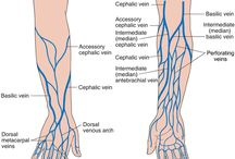 Anatomia: Venas MMSS / Anatomia: Venas Miembro superior (brazo, antebrazo, mano..)
