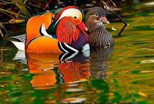 Vodne vtáctvo