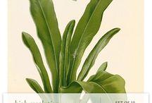 Free Plant Printables