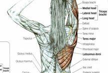 Best Anatomy