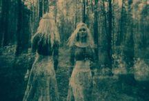 NATURE / woods