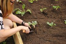 Garden & orchard / Ideas cultivo
