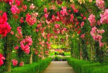 Garden And flower ideas / by Janessa Rahberger Grosu