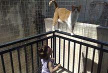 cats / Γατες