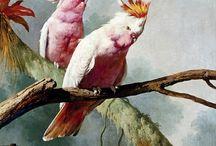 parots perroquets