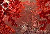 I love red.... / Punaisen eri vivahteita.